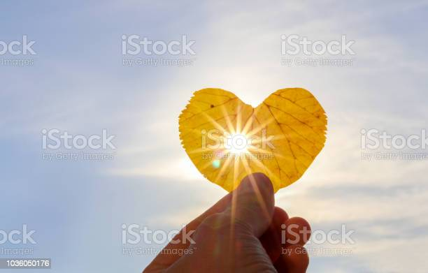 Photo of Close up shot of hand holding yellow leaf of heart shape with sun rays shining through it at light blue sky background. I love autumn concept. Copy space