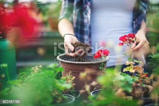 istock Close up shot of hands working with soil 622457762