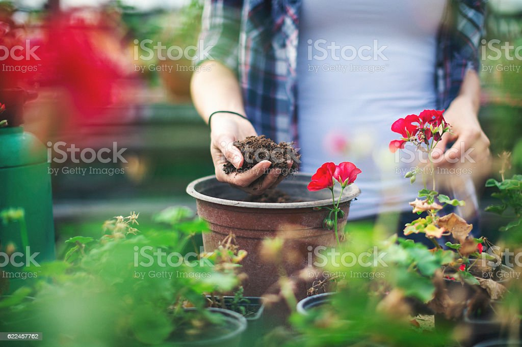 Close up shot of hands working with soil stock photo