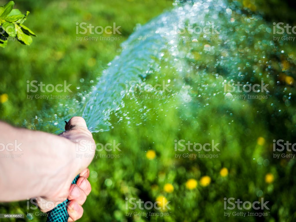 close up shot of person holding a hose and pour the grass in the garden stock photo