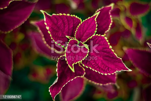 This is an close up photography of purple flowers