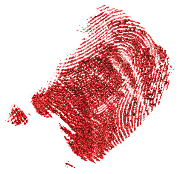 close up shot of red fingerprint isolated on a white background. bloody fingerprint. fingerprint made with blood. - deductive stock pictures, royalty-free photos & images