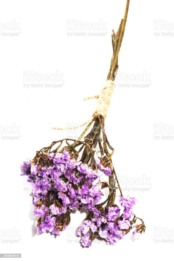 Close up single purple statice flower background use for decoration close up single purple statice flower background use for decoration on white background royalty free mightylinksfo Images