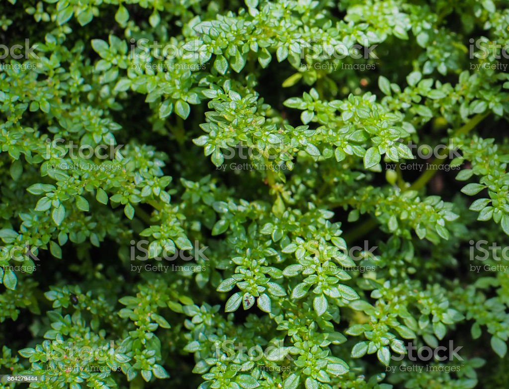 Close up Small leaf royalty-free stock photo