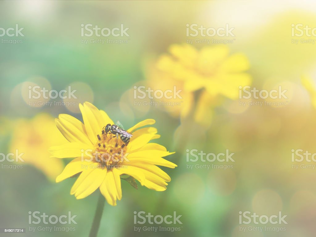 Close Up Small Yellow Flowers Fields With Vintage Filter Effect And