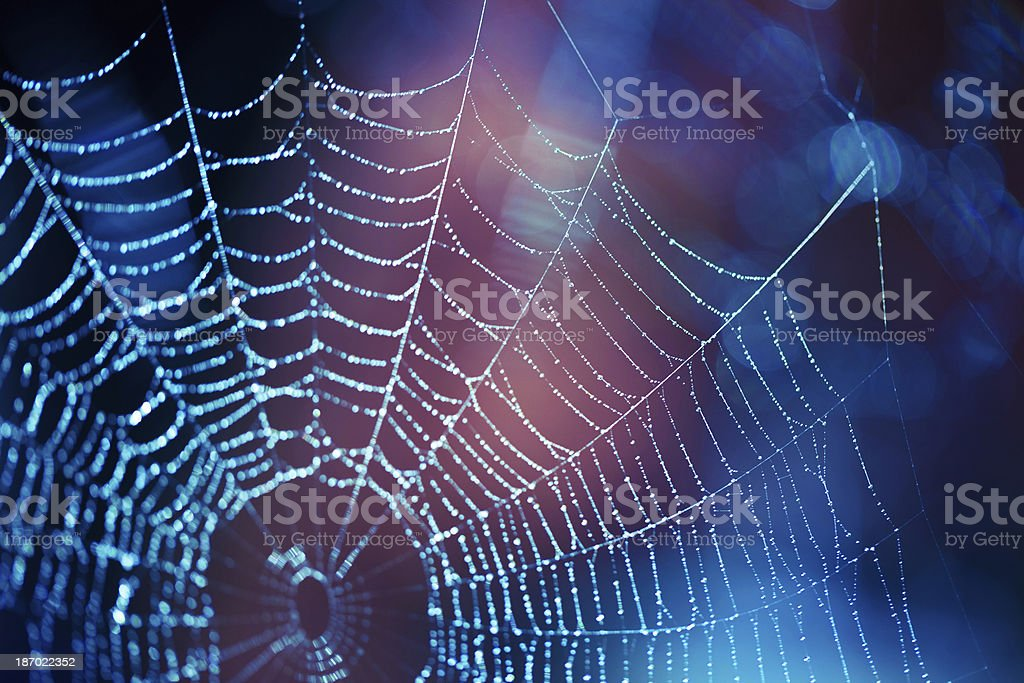 Close up spider web with blue and purple hues Spider web selective focus Abstract Stock Photo
