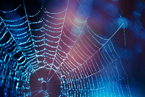 Close up spider web with blue and purple hues