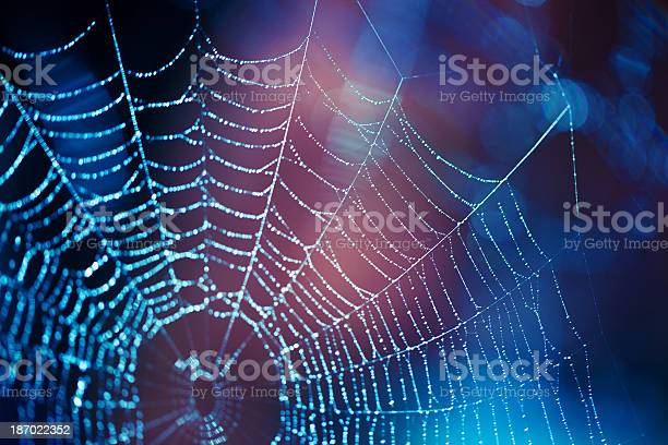 Close Up Spider Web With Blue And Purple Hues Stock Photo - Download Image Now
