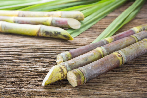 close up sugarcane on wood background close up. - canna da zucchero foto e immagini stock