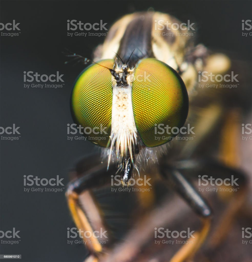 close up supper macro of robber fly on branch in the dark. stock photo