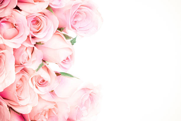 close up sweet light  pink on white background – Foto