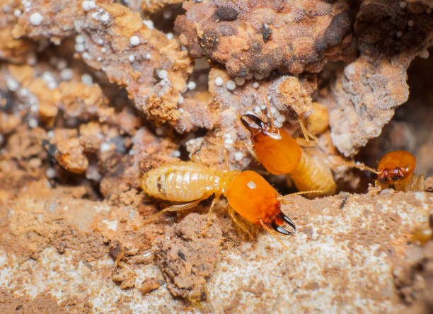 close up termites in the nests - termite stock photos and pictures