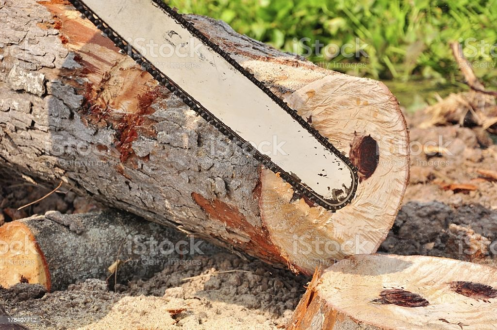 close up the man working to cut tree royalty-free stock photo
