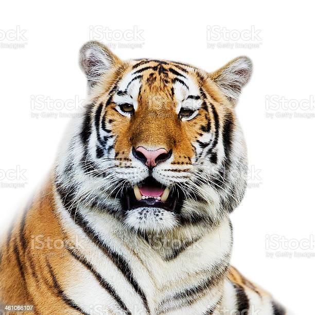 Close up tiger picture id461066107?b=1&k=6&m=461066107&s=612x612&h=5qeg mmb8dkiqv4bwwrwknmtbpuxi5i62iryltusyvk=