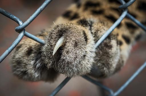 Closeup Van Tiger Stockfoto en meer beelden van Agressie
