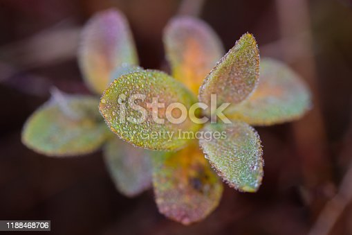 morning dew in autumn on colorful leaves misty cool early, wet
