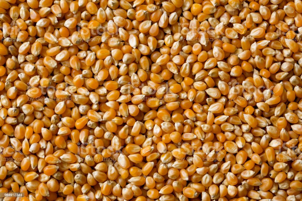 close up top view of pile of corn seeds royalty-free stock photo