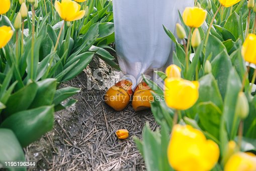 Close up typical dutch national wooden clogs . Traditional netherlands wooden yellow klompen shoes stand on the ground between colorful yellow tulip flower fields.