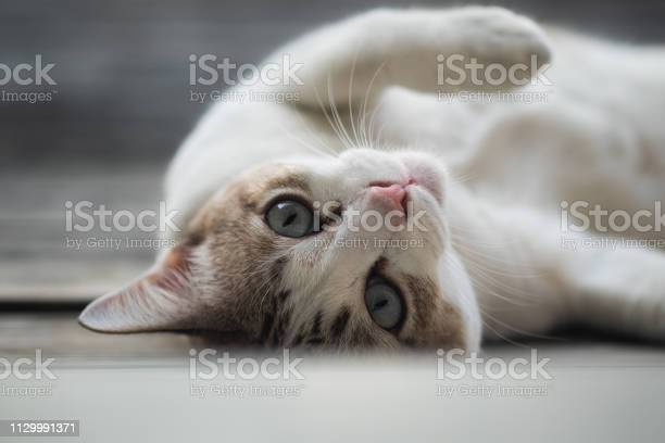 Close up view of a cute cat selective focus picture id1129991371?b=1&k=6&m=1129991371&s=612x612&h=qhnozcbh 4vn4e8ulgl8lupjm7smailcwecyo4fxax8=