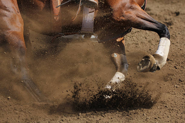 Close up view of a sliding barrel racing horse. stock photo