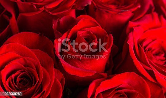 A Close Up View of Bright Red Roses