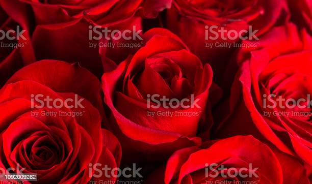 Close up view of bright red roses picture id1092009262?b=1&k=6&m=1092009262&s=612x612&h=q uuchhwelctvbffnbpiqhex5pvxlad1tfmitj8zo7g=