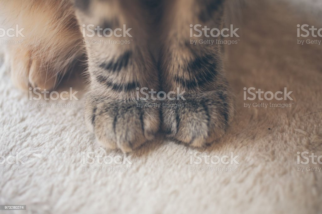 Close up view of cat paws on white background. Cat sitting on white...