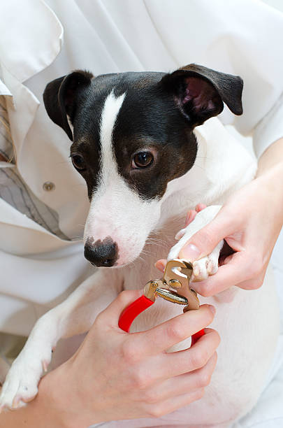 Royalty Free Dog Manicure Pictures Images And Stock Photos Istock