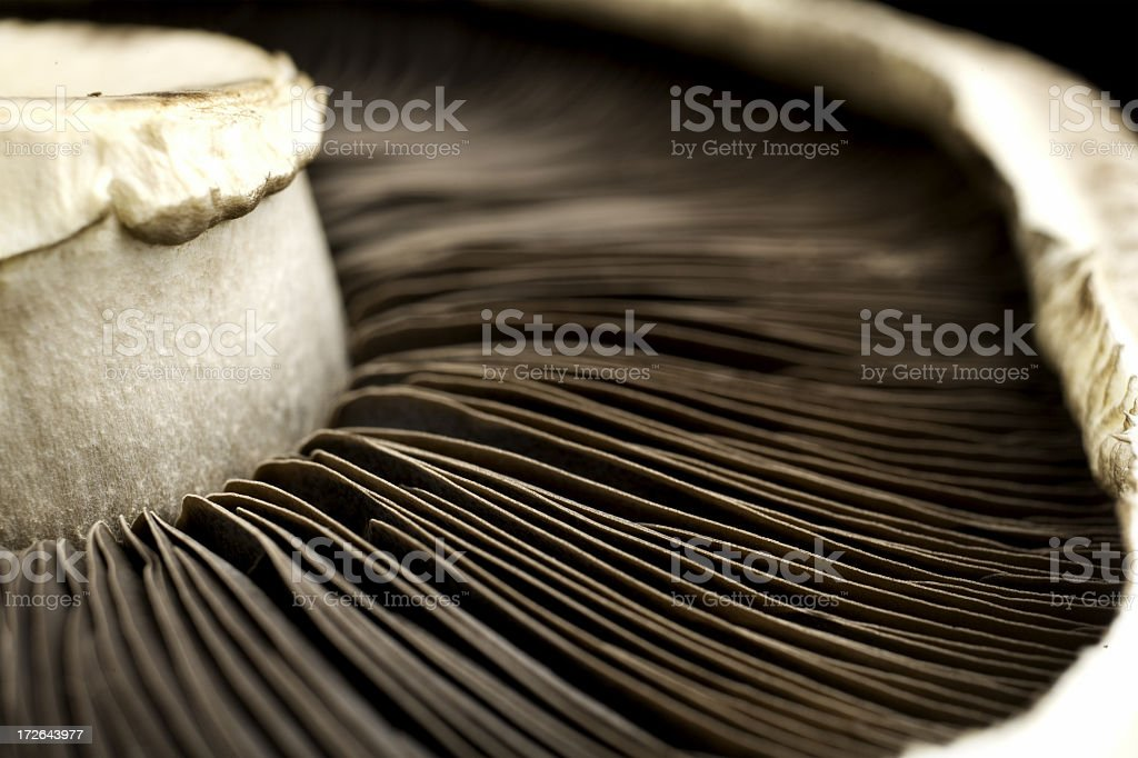 Close up view of mushroom belly stock photo