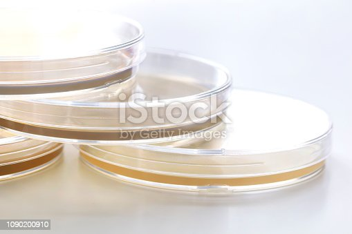 Group of Muller Hinton Agar Plates commonly used for antibacterial succeptibility testing by disk diffusion method, close up view of petri dishes with Muller Hinton Agar