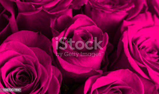 istock A Close Up View of Pink Roses 1092007892