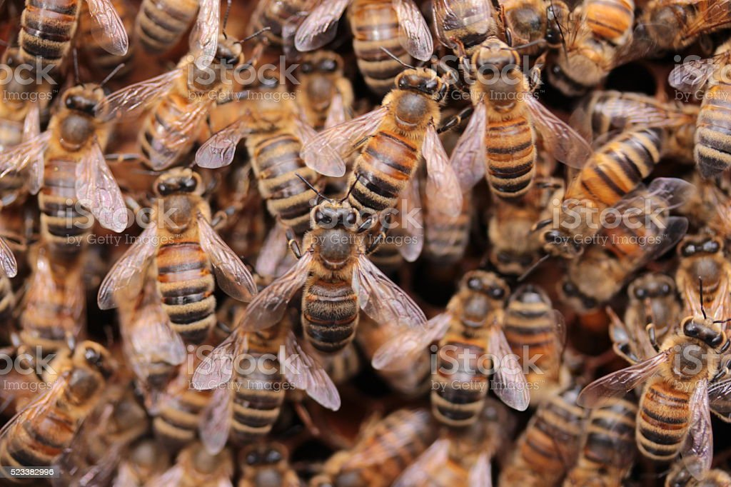 Close up view of several bees inside the hive stock photo