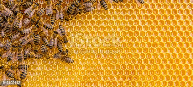 istock Close up view of the working bees on honey cells 545102442