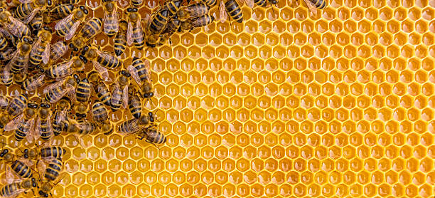 close up view of the working bees on honey cells - animal markings stock photos and pictures