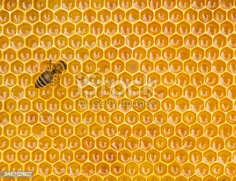 istock Close up view of the working bees on honey cells 545102602