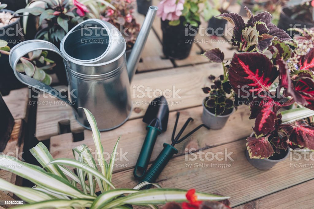 close up view of watering can, hand trowel, hand rake and arranged various plants on wooden surface stock photo