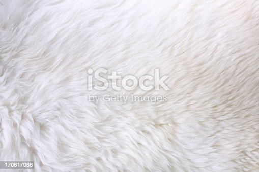 Detail of lamb fur