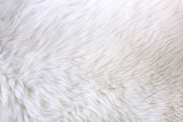 Close up view of white fur detail Detail of lamb fur animal hair stock pictures, royalty-free photos & images