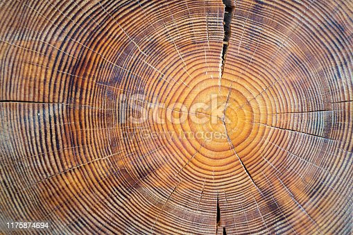 Close up view of wood core. Sawn mature tree section with cracks and rings that tell it's age. Natural organic texture with cracked and rough surface.