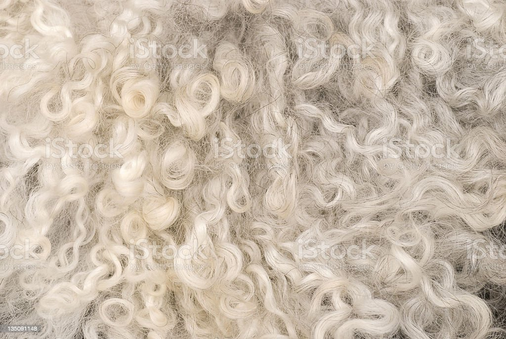 A close up view of wool sheepskin bildbanksfoto