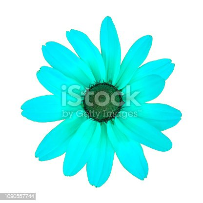 istock Close up view on a unreal turquoise daisy flower, isolated on a white background 1090557744