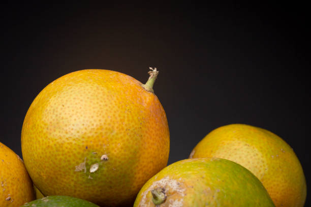 Close up with texture and detail of colourful fresh ripe orange and green Citrus Tangerina fruit resting on others. Studio low key food still life against a dark grey background. carbohydrate biological molecule stock pictures, royalty-free photos & images