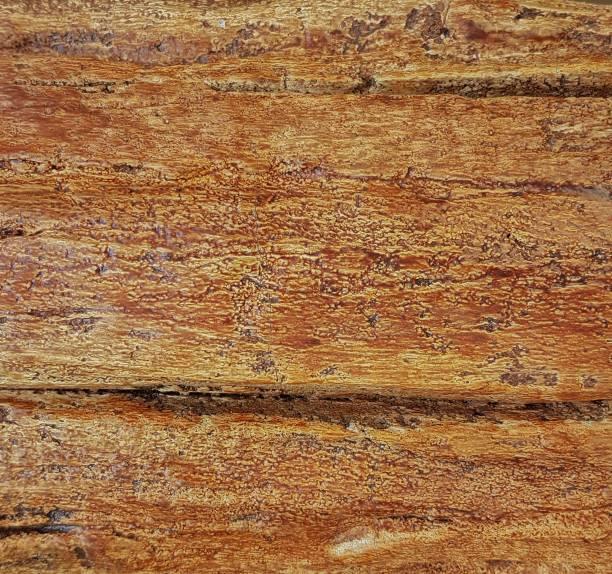 Holz aus der Nähe – Foto