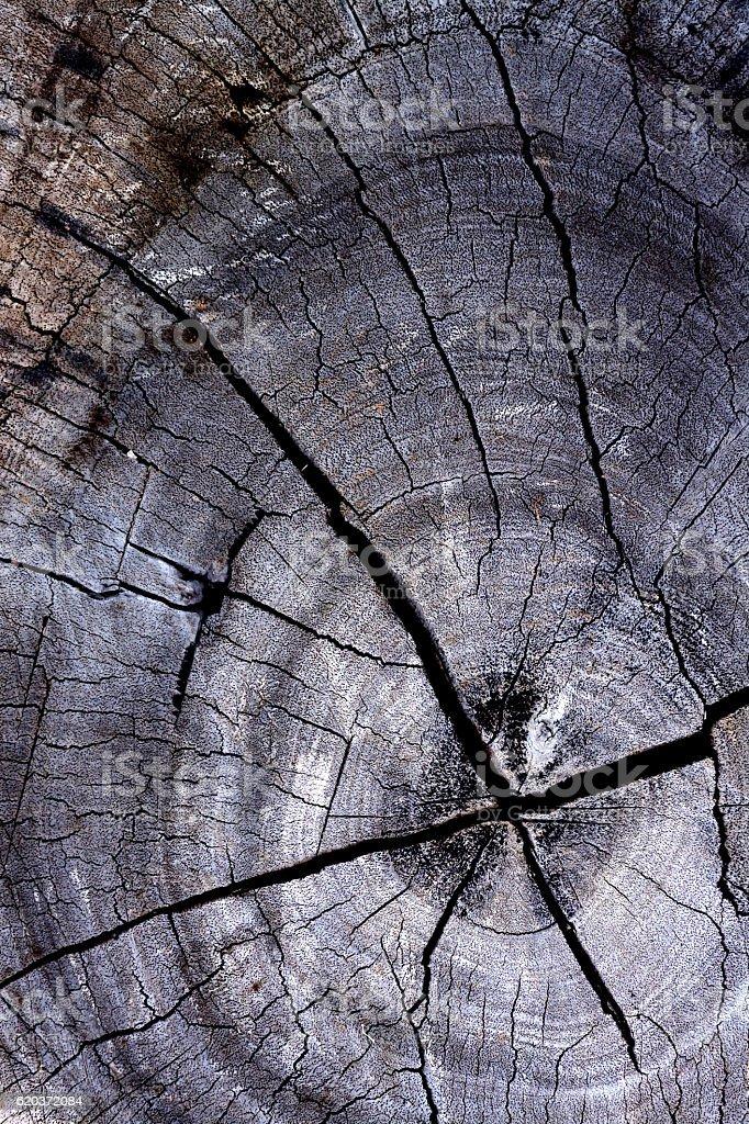 Zbliżenie tekstura drewna zbiór zdjęć royalty-free
