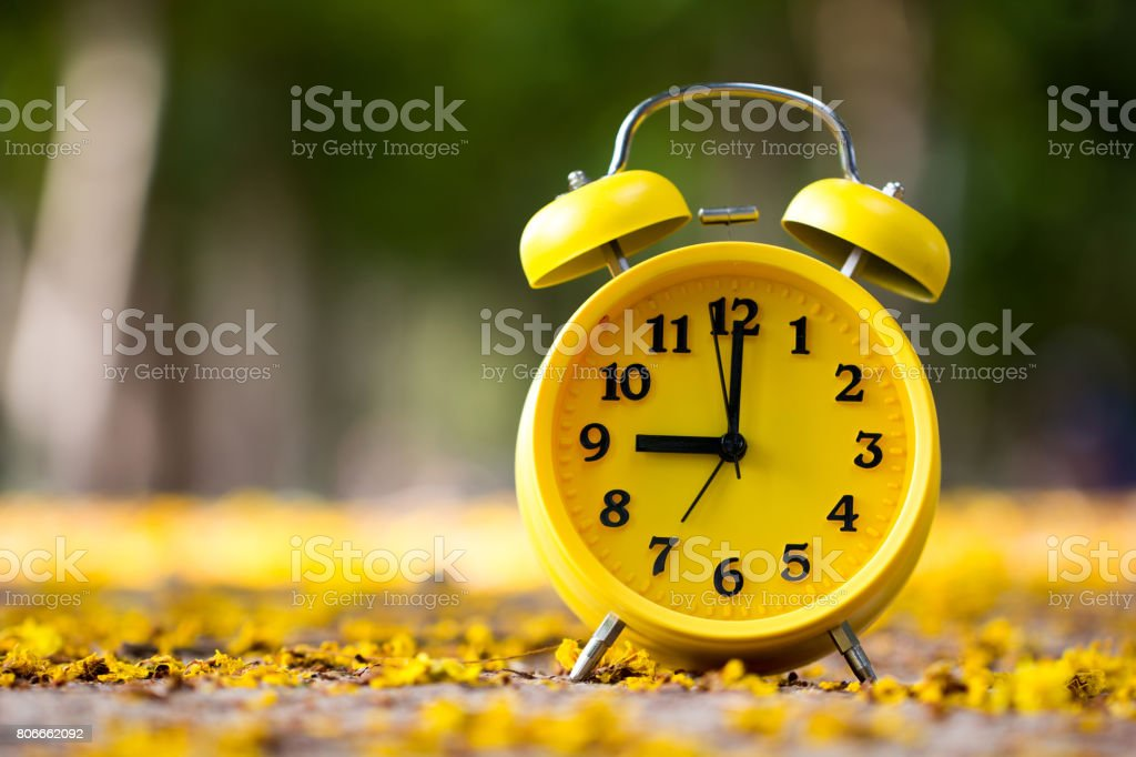 Close up yellow Alarm clock on the ground with yellow flowers around. stock photo