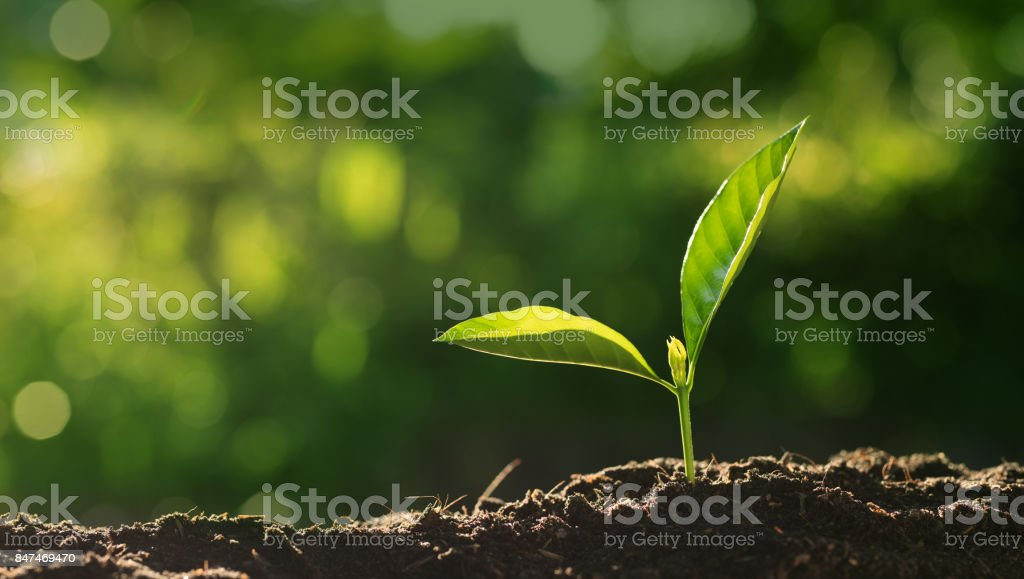 Close up Young plant growing over green background stock photo