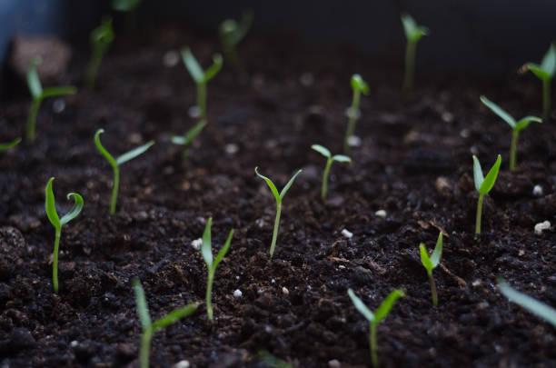 Bouchent la germination des graines jeunes et plante poussant avec goutte d'eau de pluie sur l'environnement du soleil vert et le matin - Photo