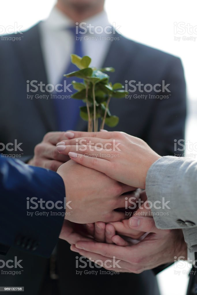 close up.a fragile little sprout in the hands of the business team stock photo