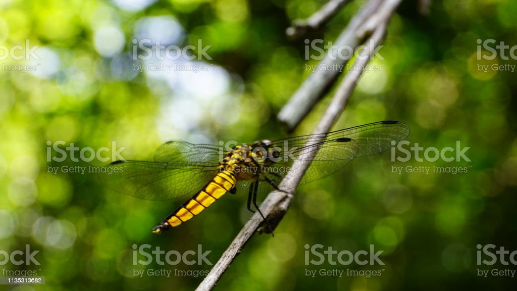 close up,butterfly,dragonfly,caterpillar stock photo