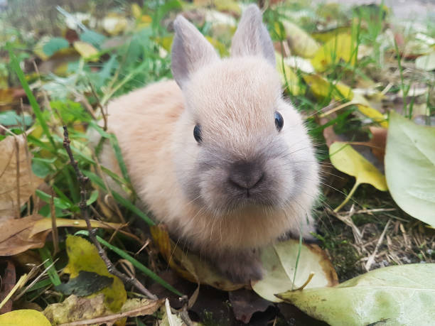 Nahaufnahme.cute kleines Kaninchen sitzt auf dem Gras – Foto